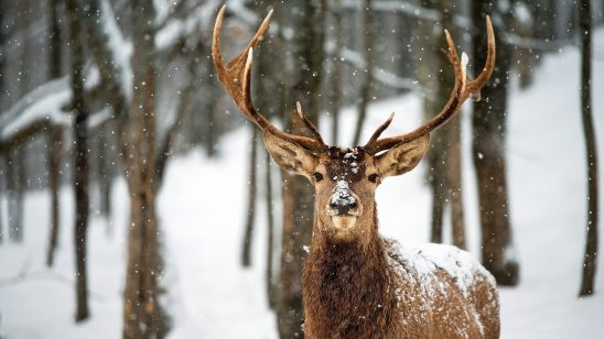 deer in snow wqhd 1440p wallpaper