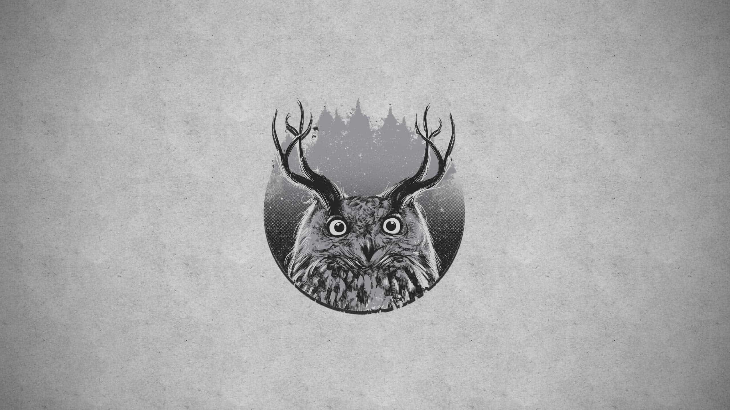 horned owl wqhd 1440p wallpaper