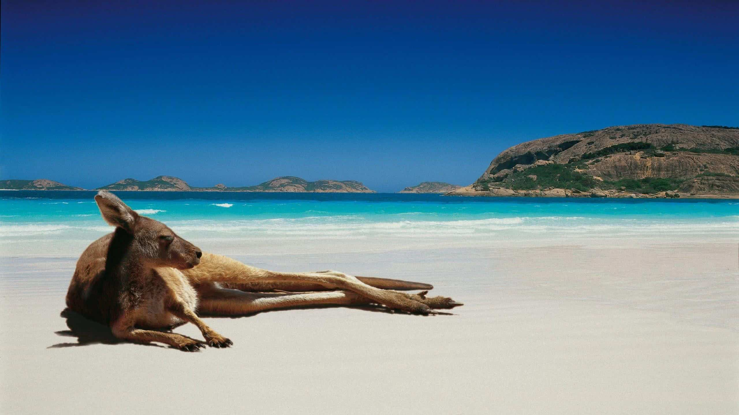 kangaroo cape le grand national park australia wqhd 1440p wallpaper