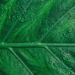 water droplets on leaf uhd 4k wallpaper